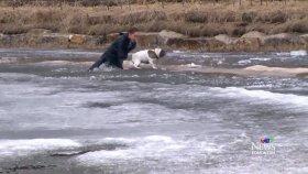 Donmuş Göle Düşen Köpeği Kurtaran Kanadalı