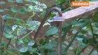 Ağaçtaki Meyveyi Almaya Çalışan 9 Yaşındaki Zeynep'in Bacağına Demir Korkuluk Saplandı