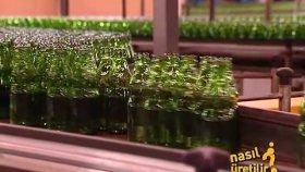 Cam Şişeler Nasıl Üretilir ?