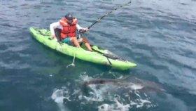 Balıkçının Köpekbalığı İle Mücadelesi
