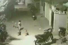 Karşısına Çıkan Köpeklere Aslan Kesilen Çocuk