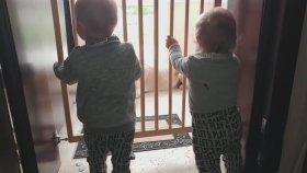Yeni Oyun Arkadaşımız Havuç - Eğlenceli İkiz Bebek Ve Oyun Videoları