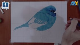 Gerçekçi Kuş Çizimi   Realistic Bird Drawing
