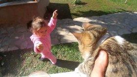 Bahçemizde onlarca kedicik hepsi birbirinden güzel , eğlenceli çocuk videosu