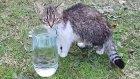Bu kedicikler enteresan yaratıklar kendi suyu var Alinanın su içtiği yere bakın : : ) )