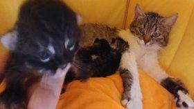 Kedicik Alinanın minikleri gözlerini açıyor , eğlenceli çocuk videosu