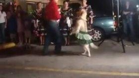 Dans Etmede Çığır Açan Profesyonel Köpek