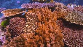 Mercan Peşinde ( Chasing Coral ) Türkçe Altyazılı Fragman