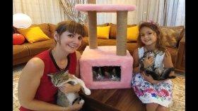 Kediciklere Yeni ev oyun kulesi aldık , eğlenceli çocuk videosu