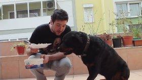 Köpeğiyle Yemek Challenge Yapan Adam