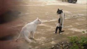 En Neşeli Kedi Videoları